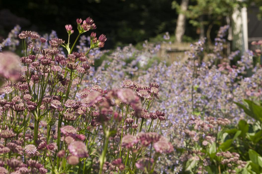 Engelse bloemenborder te Kapellen